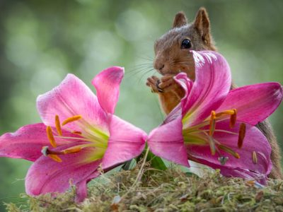 Friday Happy Hour: Pink Squirrel