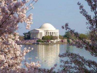 Taking Engagements Photos Near the Washington DC Cherry Blossoms